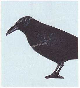 Fliegen Im Rolladenkasten : vogelatrappe vogelabwehr v gel vertreiben bettwanzen ~ Lizthompson.info Haus und Dekorationen