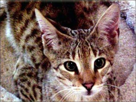 No Ordinary House Cat  Cbs News