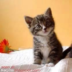kitty cat kitty cat kitty cat pictures cat pictures kitty cat pictures