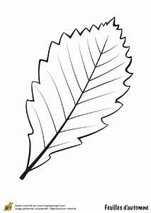 Feuilles D Automne à Imprimer : coloriage feuille de bouleau en automne ~ Nature-et-papiers.com Idées de Décoration