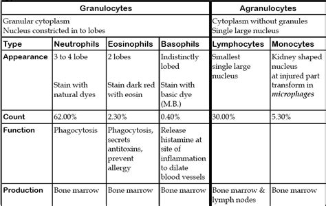 icsepapers  types white blood cells