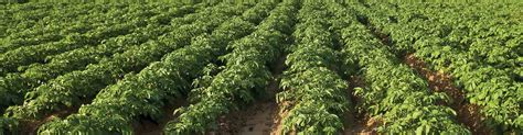 Risk due to small portfolio sizes in the reporting. Supplemental Coverage Option - American Farm Bureau ...