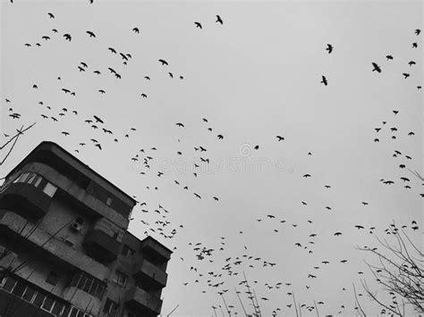 Birds Over Dark Sky Stock Image. Image Of Crows, Dark