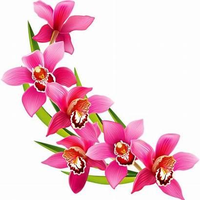Flower Clipart Flowers Arrangement Watercolor Simple Orchid