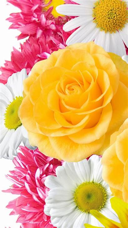Iphone Flowers Yellow Wallpapers Flower Resolution Backgrounds