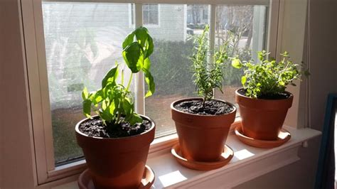 windowsill herb garden how to create your own windowsill herb garden