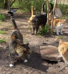 cat colony furr donations support