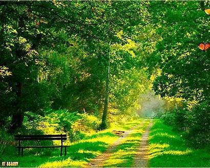 Gifs Spring Seasons Francs Parcs Bois Lowgif