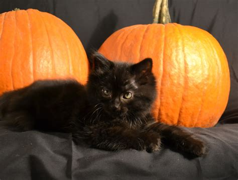 The Reality Check 164 Black Cat Abuse On Halloween