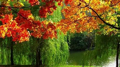 Autumn River Foliage Leaves Trees