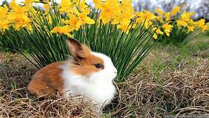 Spring Animal Wallpaper for Desktop - WallpaperSafari