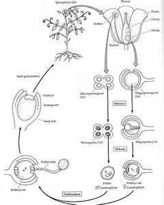 Chapter 12a  Plant Development