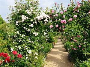 Comment Tailler Les Rosiers : video comment tailler les rosiers jardin taille ~ Nature-et-papiers.com Idées de Décoration