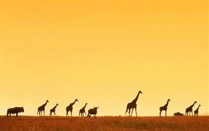Africa Mobile Wallpaperaccess Backgrounds Wallpapers Desktop