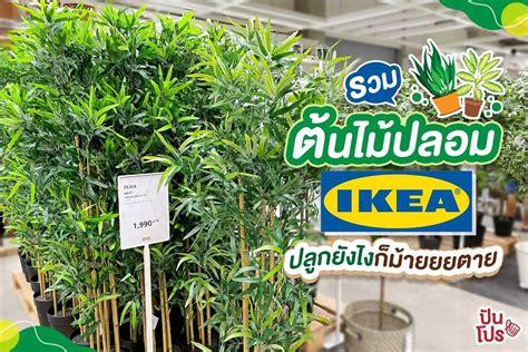 รวมต้นไม้ปลอมน่าซื้อที่ IKEA เอาไว้ประดับบ้านสวยๆ นักตกแต่งบ้านตัวยงไม่ควรพลาด!   ปันโปร ...