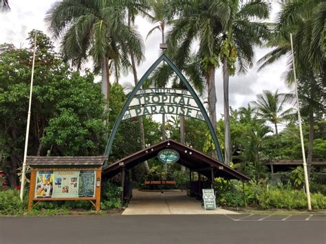 Fern Grotto Kauai Boat Tours by Best Luau In Kauai Smith Family Luau Fern Grotto Tour