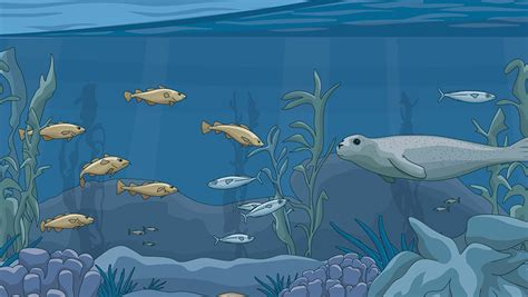reasons   overfishing  europe  pew