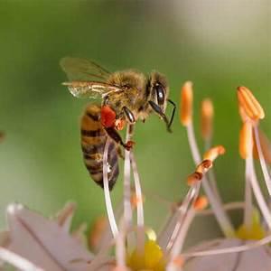 Bienen Und Wespen : unterschiede bienen wespen hornissen ace zydek ~ Whattoseeinmadrid.com Haus und Dekorationen