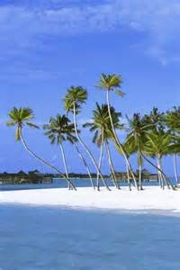 Beautiful Beaches with Palm Trees
