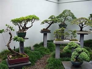 topfpflanzen die topfpflanze With whirlpool garten mit freiland bonsai bäume