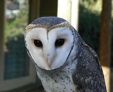 89 Best Owls Are A Hoot Images On Pinterest