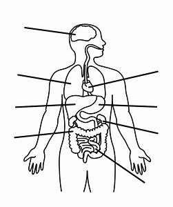 Body Organs Diagrams Blank