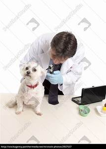 Veterinarian at work - Royalty free image - #2937537 ...