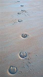 1000+ images about hoof prints on Pinterest