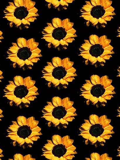 Sunflower Background Sunflowers Gifs Flowers Girassol Flores