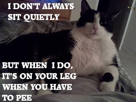 funniest cat pics   time