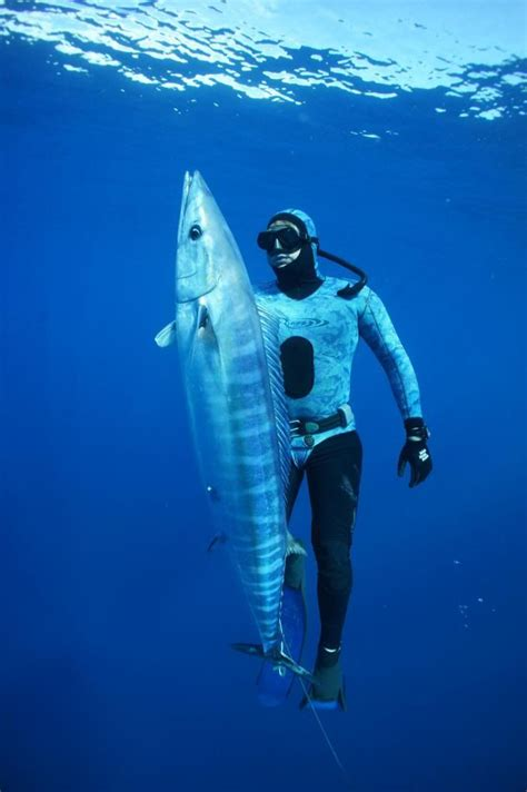 spearfishing images  pinterest spear fishing