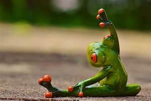 Frosch Bilder Lustig : kostenloses foto sport gymnastik frosch lustig kostenloses bild auf pixabay 927762 ~ Whattoseeinmadrid.com Haus und Dekorationen