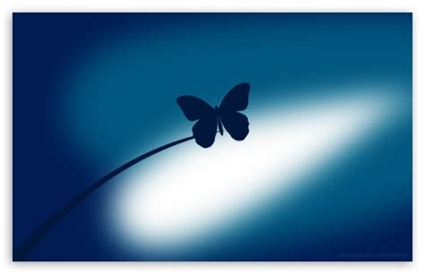 Blue Butterfly 4k Hd Desktop Wallpaper For 4k Ultra Hd Tv