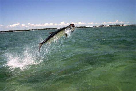 fishing saltwater daytona salt offshore