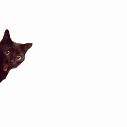 Cats Funny Glasses Llamacorns Mine Tensa Mente