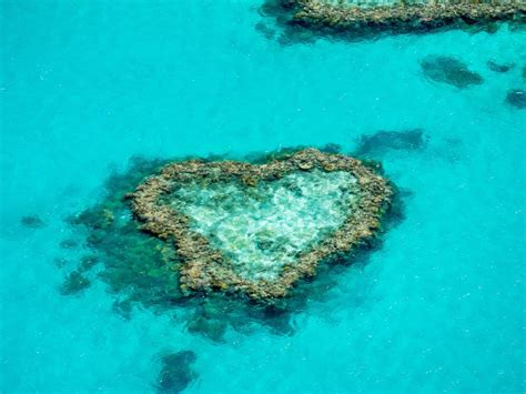 great barrier reef adventure day tours cruises