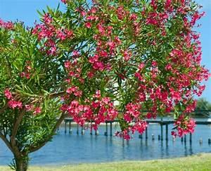 Mediterrane Pflanzen Winterhart : mediterrane pflanzen t rkei deutsch t rkische community turkish ~ Frokenaadalensverden.com Haus und Dekorationen