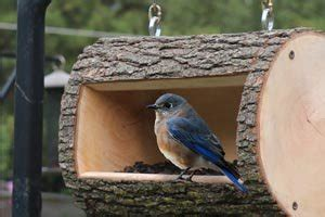 diy bird feeder plans homemade log birdfeeder patterns monograms stencils diy projects