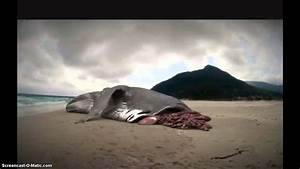 Megalodon still alive - YouTube