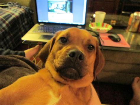 hilarious animal selfies     day