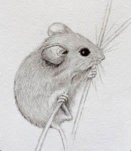 454 best SKETCHES OF DORMICE - MICE - AND - RATS images on ...