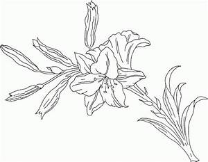 Lily Flower Coloring Pages - Coloring Home