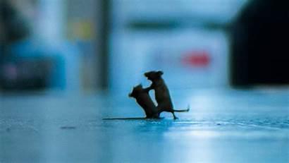 Wildlife Photographer Mice Award Fighting Rowley Sam