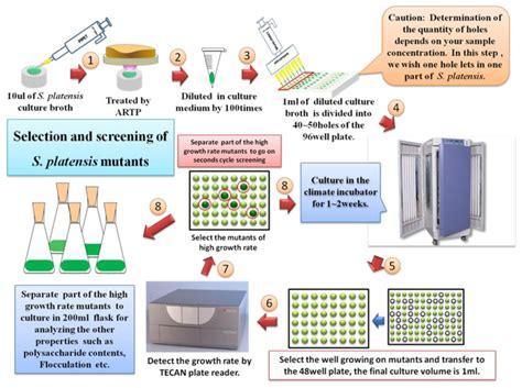 experimental protocol  high throughput screening