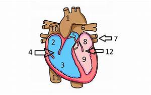 Identify Heart Shape Through The Numbers