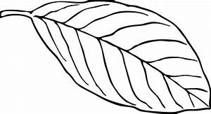 Free printable leaf coloring pages for kids: 11 pics - HOW ...