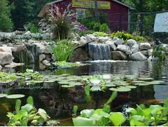 Water Garden Water Garden In Ohio Call Pond Wiser At 330 833 FROG Pond Wiser