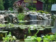 Water Garden Water Garden In Ohio Call Pond Wiser At 330 833 FROG Pond Wiser