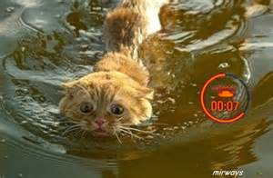 cats aquatics the scrapyard wot funnies 5
