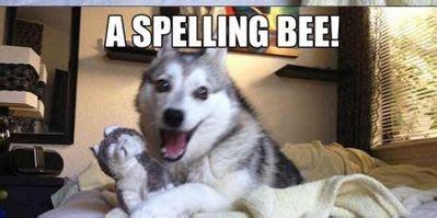 Pun Husky Meme - most viewed jokes dose of funny